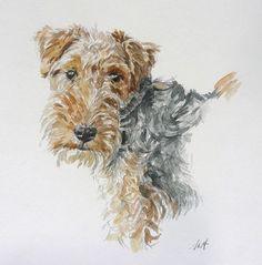 Airedale Art by Steve Alport Fox Terriers, Terrier Galés, Irish Terrier, Wire Fox Terrier, Airedale Terrier, Lakeland Terrier, Large Dog Breeds, Dog Portraits, Animal Paintings
