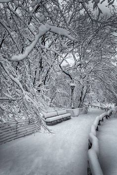 Central Park - N.Y.