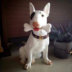 Nice #Bull #Terrier
