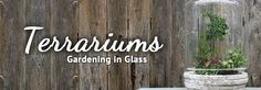 Gardening Under Class with Terrariums from Armstrong Garden Centers / Armstrong Garden Centers