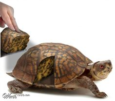How realistic is this turtle cake? Crazy Cakes, Fancy Cakes, Cupcake Torte, Extreme Cakes, Realistic Cakes, Cool Cake Designs, Cool Cake Ideas, Gravity Cake, Animal Cakes