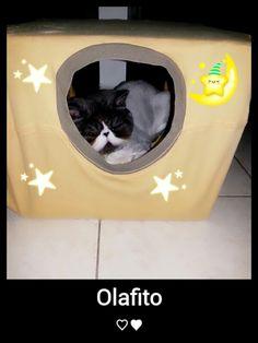 gatico persa en su madriguera