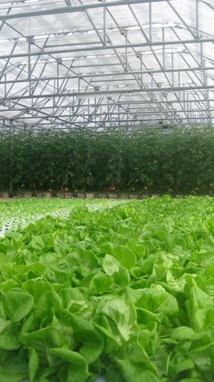 Hydroponic farm at CuisinArt