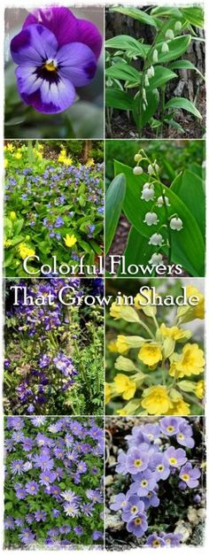 Colorful Flowers That Grow in Shade