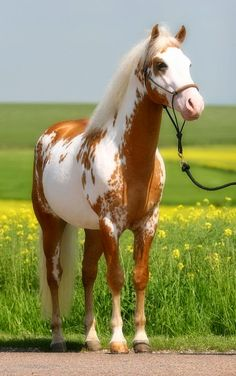 Top 5 Most Beautiful Horse Breeds
