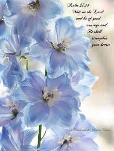 Wait on the Lord and be of good courage and He shall strengthen your heart ♥ Psalm 27:14