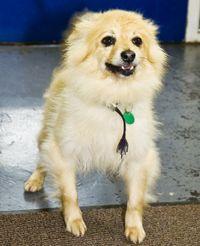 Rspca Chesterfield North Derbyshire Branch Dogs For Adoption Dog Adoption Dogs Pet Adoption