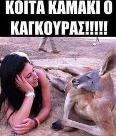 Funny Times, Greek Quotes, True Words, Funny Photos, Animals And Pets, Hilarious, Jokes, Lol, Humor