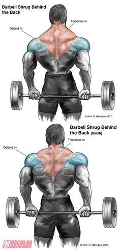 Fitness Motivation : Upper Back - Trapezius Workout. - All Fitness Bodybuilding Training, Bodybuilding Workouts, Bodybuilding Supplements, Female Bodybuilding, Traps Workout, Workout Guide, Workout Men, Workout Fitness, Trainer Fitness