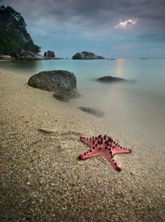 sea star by dody herawan www.come.to.belitung.com Belitung, Underwater Life, Beach Fun, Sea, Starfish, Awesome, Nature, Travel, Outdoor