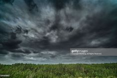 Stock-Foto : Close-Up Of Grass On Field Against Sky