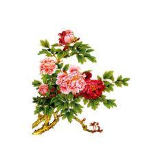 L'île de Kahlan: TUBE:FLEURS ❤ liked on Polyvore featuring home, home decor, flowers, backgrounds, fleurs, flores and filler