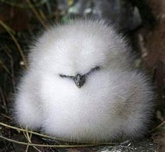 Fluffy white bird sleeping in nest.