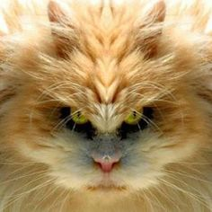 angry cat...lol  from patrick martin