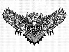 drawing of owl - Google Search