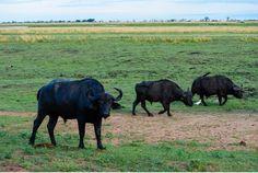 Chobe Nationalpark Botswana und Victoriafalls Zambia-26