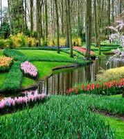 Netherland Tulip Keukenhof Garden