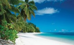 6 NIGHTS DESROCHES ISLAND  - SEYCHELLES  http://www.africanwelcome.com/tours-and-safaris-south-africa-botswana-namibia-vicfalls/honeymoon-packages-south-africa-botswana/bush-and-beach-african-honeymoon-safari