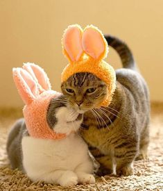 A fuzzy cat hat to turn your pet into a sweet lil' bunny. Your pet is gonna be hopping mad but at least you'll have a good time. It's Been A Tough Week, So Reward Yourself With One Of These 26 Tiny Purchases Silly Cats, Funny Cats, Weird Things On Amazon, Easter Cats, Cat Hat, Cat Memes, Your Pet, Cute Animals, Bunny