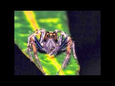 Beautiful Bugs (slideshow) - YouTube