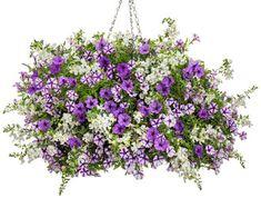 Container Garden Recipe Search | Proven Winners Outdoor Flower Planters, Outdoor Flowers, Container Size, Container Gardening, Fall Containers, Proven Winners, Recipe Search, Large Plants, Color Schemes