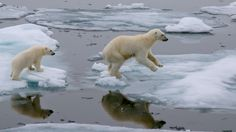 If oil spills in the Arctic and no one is around to clean it up, does it just stay there?   Grist