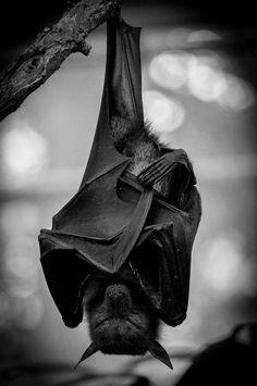 The Occasional Bat (@OccasionalBat) / Twitter