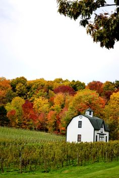 lux barns | ... on White: The Pinot Affair [Wineries across Niagara] | Local Lux