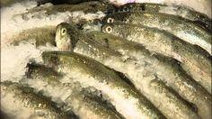 Vím, co jím: Chci se najíst i po padesátce Fish, Youtube, Medicine, Pisces, Youtubers, Youtube Movies