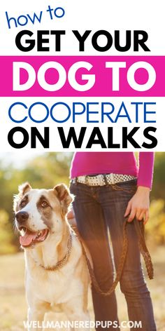 Dog walking tips: How to get your dog to cooperate on walks.