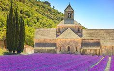 Provence mit Hund - Beste Reisezeit zum Ferienhaus-Urlaub in Frankreich