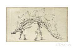 Dinosaur Study III Poster par Ethan Harper sur AllPosters.fr