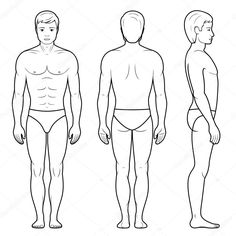 Vector illustration of male figure - front, back and side view in outline Human Body Drawing, Anatomy Images, Body Outline, Massage, Wedding Tokens, Body Sketches, Drawing Templates, Figure Poses, Outline Drawings