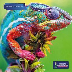 Um mundo colorido ao seu alcance!