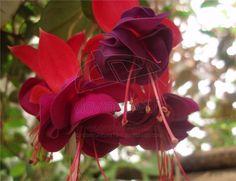 stuctured petals, peplums, ruffles