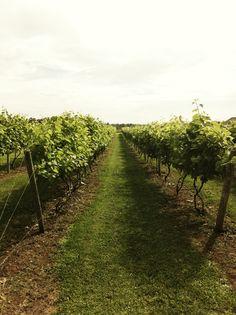 Thousand Islands Winery in Alexandria Bay, NY