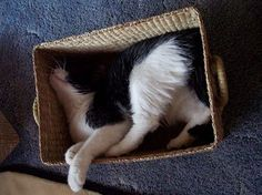 Surely that can't be comfortable?  :)