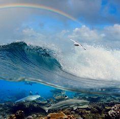 Ocean . . .