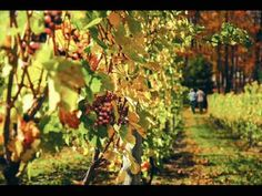 visit all the wineries in MI