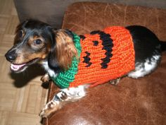 9 Easy Halloween Accessories for Adults, Children, and Pets!