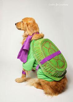Scooby doo costume pinterest easy diy costumes diy costumes and fun teenage mutant ninja turtle dog costume solutioingenieria Images