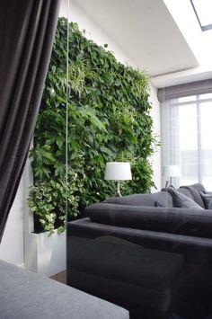 zielone ściany z żywych roślin