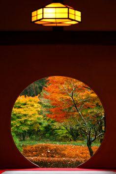 この秋は紅葉が撮れてない、、ということで弾丸で鎌倉へ行ってきました。 カフェにも多くの方がアップされている明月院の丸窓、じかに見ることができて感動しました。(  ̄▽ ̄)/