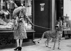 cheetah on a leash   Cheetah on a leash   Victorian and weird old photography   Pinterest