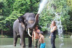 Sumatra Elephant, Tangkahan Sanctuary, Hidden Paradise in Sumatra. www.bukitlawangtourtrekking.com