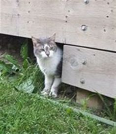 Found Cat - Unknown - Tottenham, Ontario, Canada L0G 1W0 on June 13, 2014 (13:00 PM)