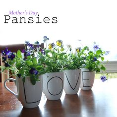 Pansies are a aged old Autumn gardeners favourite. With their delicate colourful flowers, they are gorgeous as border plants and pot displays. For something really special and unique this Mother's Day, why not try this delightful 'Coffee Mug' pansy craft from Be A Fun Mum #pansies #flower #mothersday #aboutthegarden #autumn #gardeningsaustralia #craft #DIY