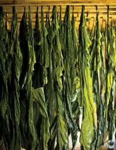 Kelp: It's whats for dinner, article in Downeast Magazine