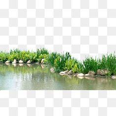물,호숫가,공원,소재 Photoshop Rendering, Photoshop Effects, Photoshop Elements, Tree Photoshop, Studio Background Images, Black Background Images, Tree Psd, Elevation Drawing, Overlays Picsart