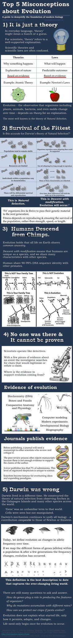 """Top 5 Misconceptions About Evolution - Every time I hear someone say,""""It's just a theory"""" about evolution, I automatically think less of their intelligence..."""